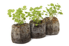 There ecological baby plants Royalty Free Stock Images