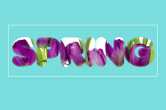 There are flowers in the SPRING text Royalty Free Stock Photography