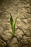 There is Hope. Small Plant on the Cracked Dry Land. Drought Photo Collection Stock Photos