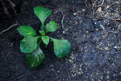 There is a hope for lonely life. A small plant in soil-New life. Small plant Royalty Free Stock Photo