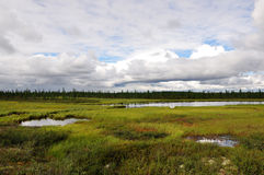 There is lake in the green meadow. There are many white clouds in the dark blue sky Stock Photography