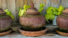 There are many clay pots for planting trees Royalty Free Stock Image