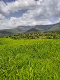 Nature Of India Fresh Green Grass And Mountain stock images