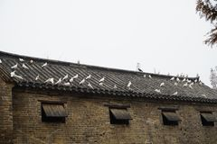 There are many pigeons have a rest on the old house in a village royalty free stock photography