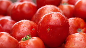 There are many tomatoes Stock Photography