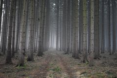 Lost in the woods. There is nothing more mysterious than the forests covered by fog royalty free stock photos