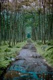 A Path in the Forest stock images