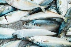 Short mackerel on market In Thailand. royalty free stock image