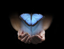There are some things you cannot keep. Male hands cupped emerging from a black background with a large blue butterfly rising up with copy space above Royalty Free Stock Photo