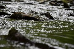 There are stones coming out of the dark river. Stock Photo