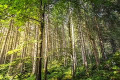 Wooded area near Eibsee lake, south of germany stock images