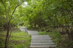 Tranquil winding path in green royalty free stock images