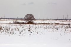 There is a tree on the snowy field royalty free stock image