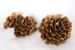There are two cones in the snow Stock Photos