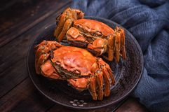 There are two hairy crabs on the plate. stock photography