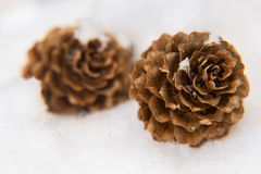 There are two pine cones in the snow Royalty Free Stock Images