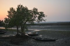 Trees and boat. There are two trees and two boats as like Capel Stock Photography