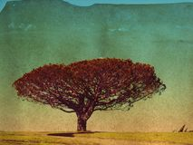 There was a large tree on a hill. Layered and textured image of a large tree on a hill.  Vintage toning and distressed look Royalty Free Stock Photo