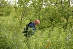 There was a woman seeking to be lost. A woman looking for a lost object in a high, lush vegetation Royalty Free Stock Photography