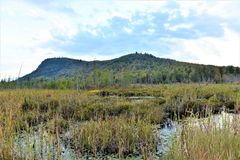 Adirondack  tupper lake wetland ecosystem. There is wetland ecosystem  of Tupper Lake in Adirondack region of New York State ,USA . Marshes , mountains ,lake Royalty Free Stock Images