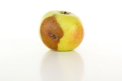 Is there worm in that apple? Royalty Free Stock Image
