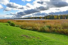 Under cloudy sky, yellow and green grass by the side of the Baltic. royalty free stock photography