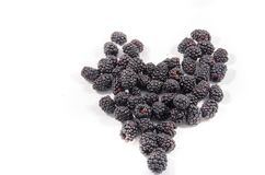 There you I have a lot of blackberry`s that look like some thing. The blackberry is an edible fruit produced by many species in the genus Rubus in the family royalty free stock images