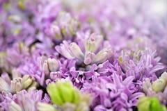 Ätherischer Hintergrund von Flieder-farbigen Blumen Lizenzfreies Stockfoto