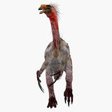 Therizinosaurus Dinosaur on White Stock Image