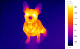 Thermal image photo, dog, french bulldog puppy Royalty Free Stock Images