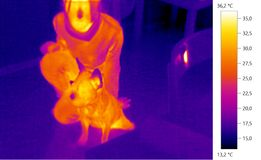 Thermal image photo, french bulldog whit person. Dog, color scale Stock Image