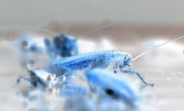 Thermal imaging of cockroach. A PS cockroach photo, the color is like a thermal imaging Royalty Free Stock Image