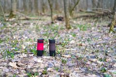 Thermal mugs in the forest on the ground. the conservation of heat of coffee or tea. two mugs of thermos royalty free stock images