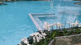 Thermal pool indoor with flowers on the edge. Orchids in the foreground stock video