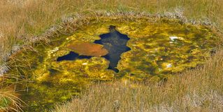Thermal Pool - Yellowstone Stock Photos