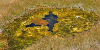 Thermal Pool - Yellowstone Stock Photos