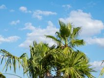 Therme Balotesti - some beautifoul palm trees with the sky with clouds in background. Therme Balotesti - beautiful and relaxing area near Bucharest - some palm royalty free stock photography