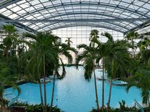 Therme Bucharest, Palm Zone royalty free stock image
