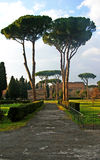 Thermes of Caracalla. View over pines in park in Thermes of Caracalla stock images