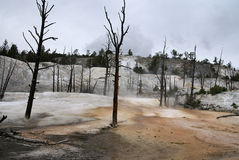 Thermische Mammutfrühlinge, Yellowstone-Park, USA Lizenzfreie Stockfotografie