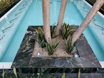 Thermische pool binnen - bloemen op de rand royalty-vrije stock afbeelding