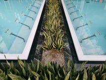 Thermische pool binnen - bloemen op de rand royalty-vrije stock foto