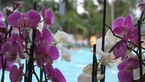Thermische pool - orchideeën in de voorgrond Stock Foto's