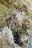 Thermische waterval Stock Foto's