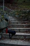 Thermocup et sac sur l'escalier en pierre Photos libres de droits