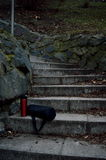 Thermocup y bolso en la escalera de piedra Fotos de archivo libres de regalías