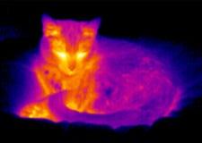 Thermografiek-slapende kat Royalty-vrije Stock Afbeeldingen