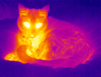 Thermograph- Relaxing cat. Cat relaxing on a soft cover. Real infrared (thermic) photo Royalty Free Stock Photography