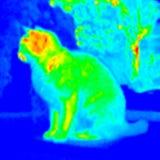 Thermograph-Sitzende Katze Stockfoto