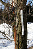 Thermomètre Image libre de droits